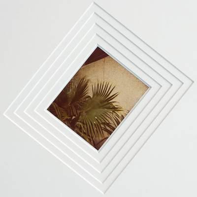 indian palm study 2011